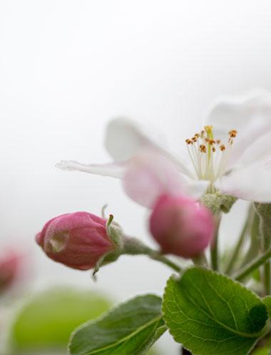 Fées du bien-être soins de beauté massage Ax les Thermes